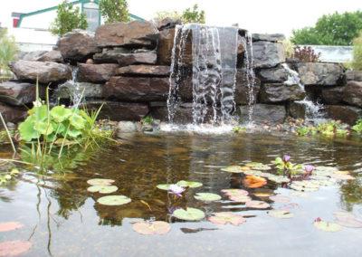 ponds11