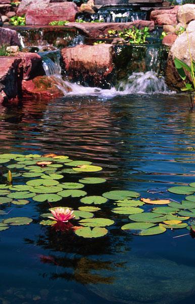ponds15
